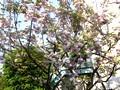 桜 花見 バーベキュー